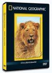 Oroszlánkalandok (Walking With Lions) - DVD