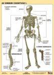 Az emberi csontváz  FIXI-tanulói munkalap