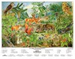 Az erdő életközössége  + munkaoldal FIXI-tanulói munkalap