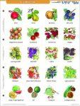 Gyümölcsök + munkaoldal FIXI-tanulói munkalap