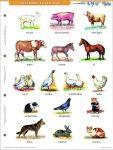 Ház körül élő állatok + munkaoldal FIXI-tanulói munkalap