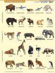 Vadon élő állatok + munkaoldal FIXI-tanulói munkalap