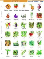 Zöldségek + munkaoldal FIXI-tanulói munkalap